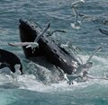 Boston Whale Watching Cruises