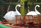 Swan Boats in Boston's Public