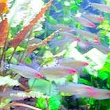 New England Aquarium - free with Boston discount card
