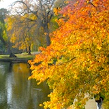 Fall foliage in Boston's Public Garden