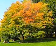 Photo of fall foliage view from Ritz Carlton Boston - www.boston-discovery-guide.com