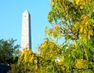 Bunker Hill Monument surrounded by fall foliage in Boston