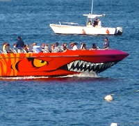 Codzilla, fastest cruise in Boston Harbor