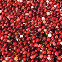 Boston Cranberry Harvest Festival - Christopher Columbus Day Event