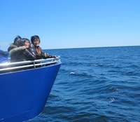 Photo from Boston whale watching tour