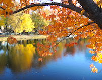 Best Spots for Fall Foliage in Boston