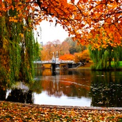 Fall foliage - top Boston attraction