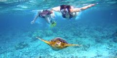 Scuba diver - Clark Anderson, Aquaimages, Creative Commons License