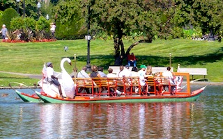 Swan Boats in Boston