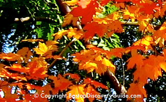 Photo of Boston fall foliage - www.boston-discovery-guide.com