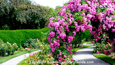 Back Bay Fens & Rose Garden tour information