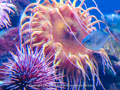 Boston attractions: New England Aquarium