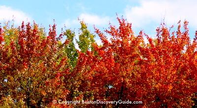 Fall Foliage tour from Boston