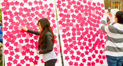 Cherry blossoms - Boston Esplanade - Boston-Japan Cherry Blossom Festival