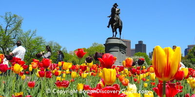 Boston's Public Garden and its  attractions