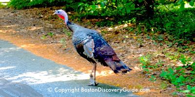 Top November events in Boston