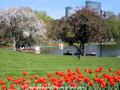 Boston Hotels with Public Garden Views