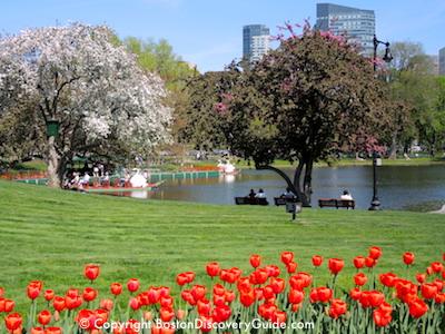 Boston Hotels with Public Garden Views