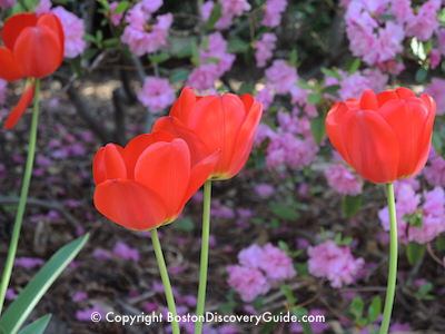 Boston's Garden Tours