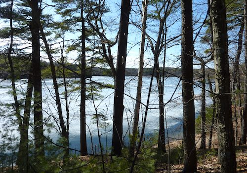 Photo of Walden Pond and surrounding Walden Woods near Concord, Massachusetts / www.boston-discovery-guide.com
