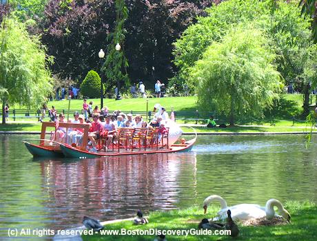 Swan Boats and real swans in Boston Public Garden