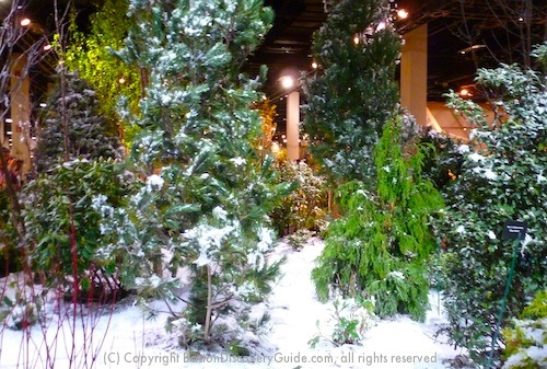 Boston Flower and Garden Show Exhibit - Winter Garden