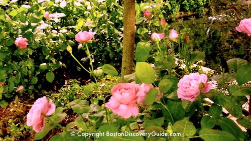 Boston Flower and Garden Show Exhibit showing Romantic Rose Garden