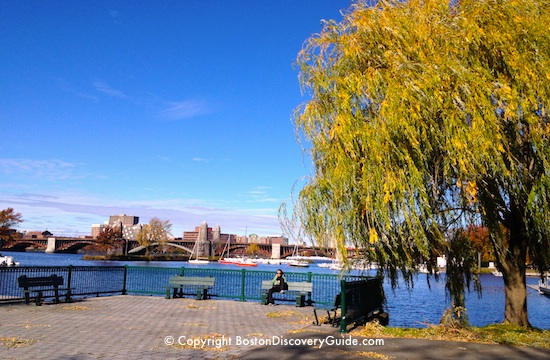 November weather in Boston includes lots of gorgeous fall foliage - this is along the Esplanade next to the Charles River
