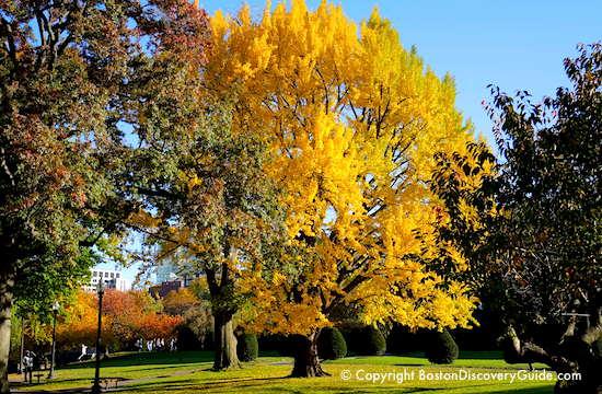Boston fall foliage in the Public Garden