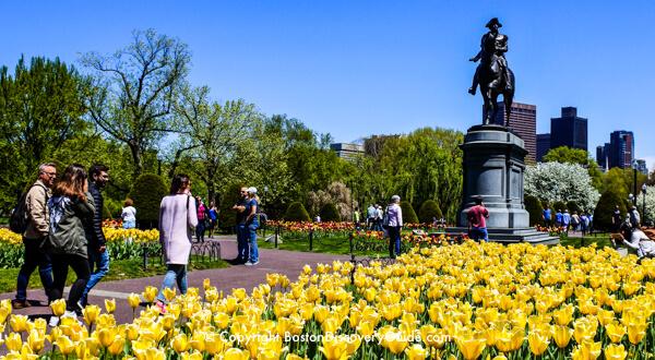 Boston Public Garden in May