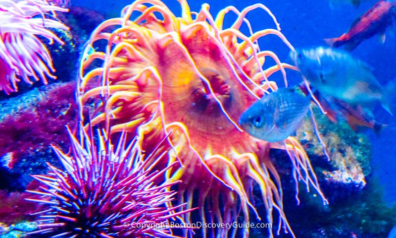February vacation week in Boston - New England Aquarium