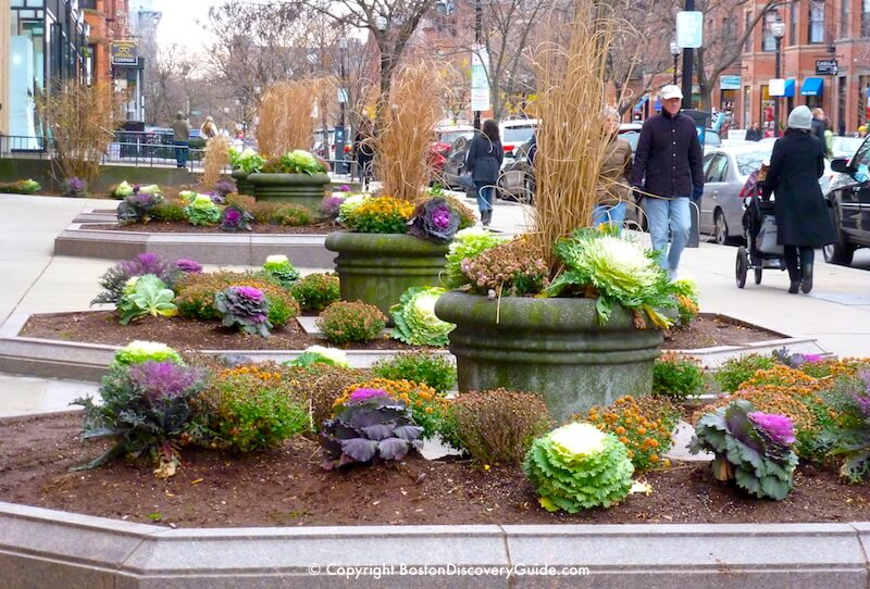 Color fall plants still in place in Boston's Back Bay neighborhood in early December