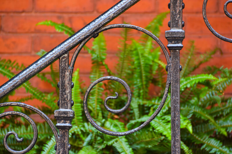 Ferns behind an iron fence in Beacon Hill