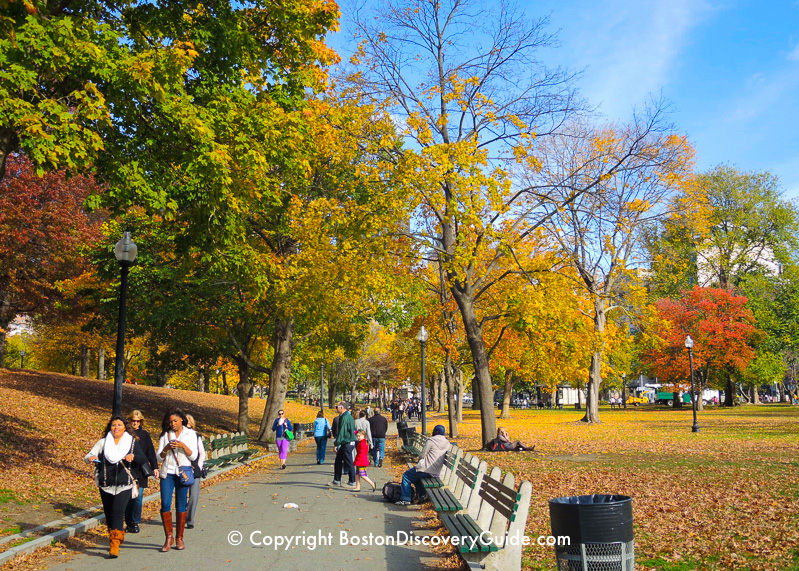 Colorful foliage on Boston Common in late October