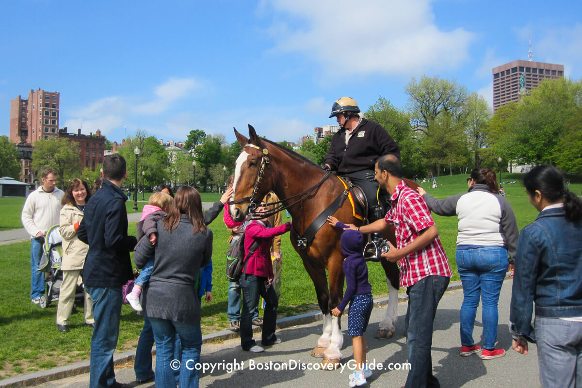 This Park Ranger and his horse in Boston Common draw an admiring crowd