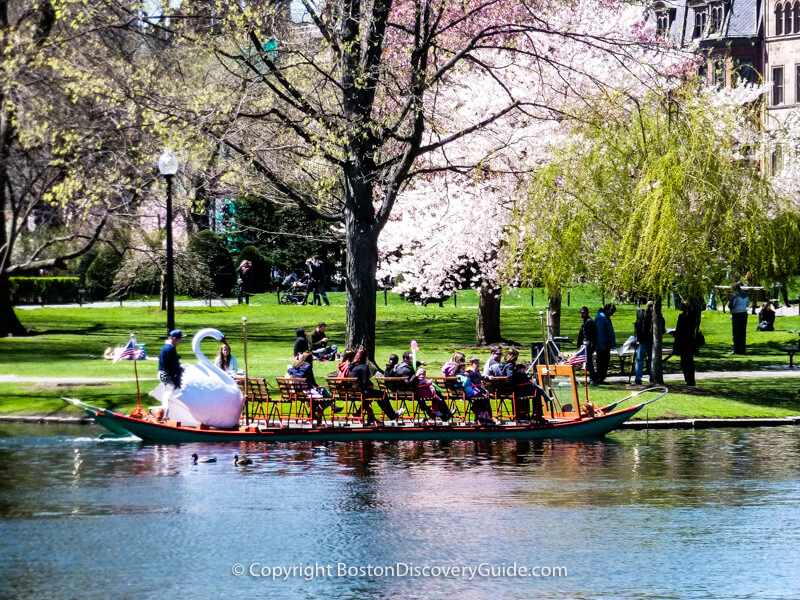 Swan boat on the Lagoon in Boston Public Garden in mid-April