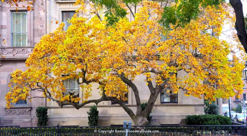 More brilliant foliage in Back Bay