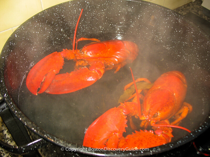 These lobsters are cooked and ready to take out of pot