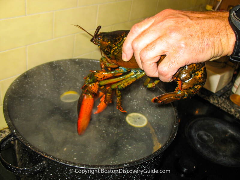 Dropping the lobster head first into the pot