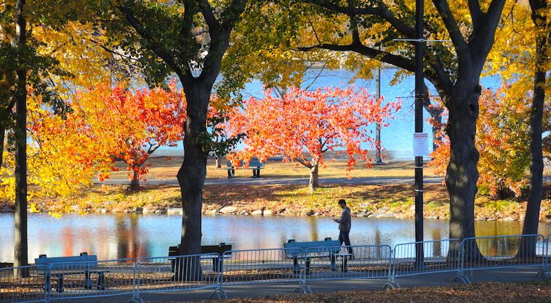 Beautiful fall foliage on a November day along Boston's Esplanade