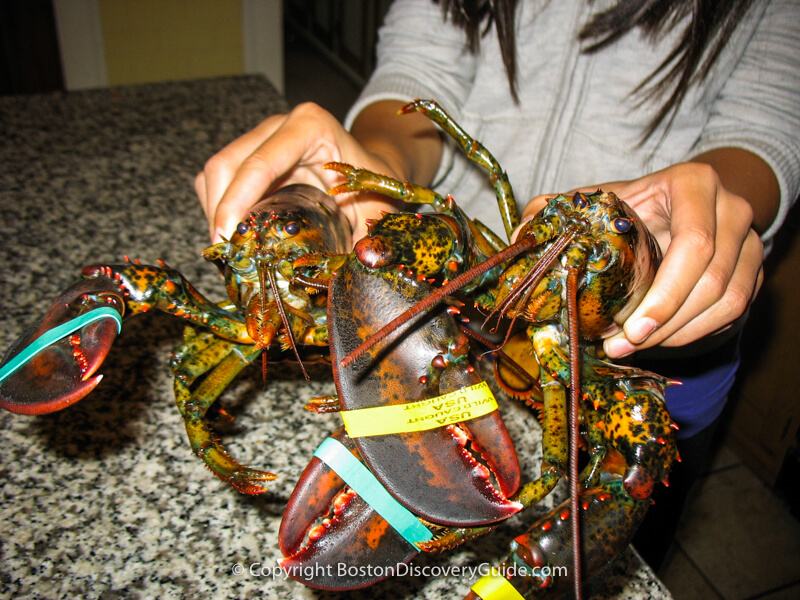 Lobsters from a seafood market with bands around the claws