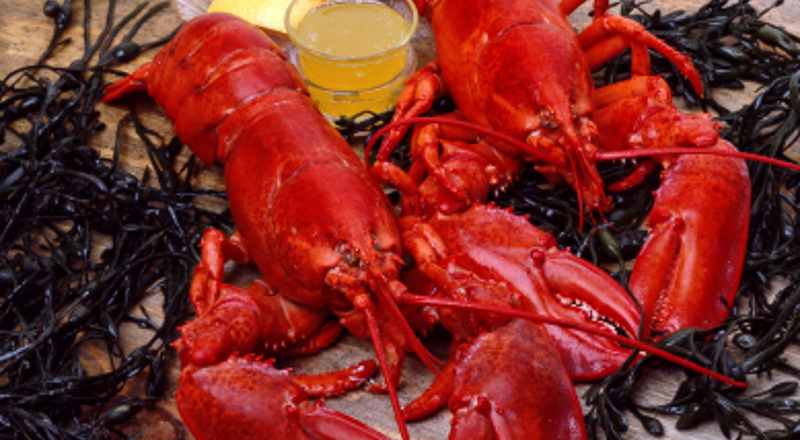 New England boiled lobsters ready to be eaten