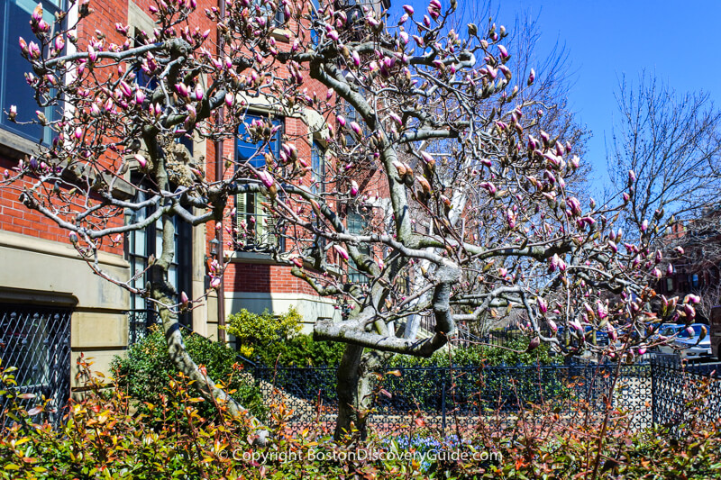 The benefit of no leaves on the trees?  You can see the beautiful architecture and copper trim on these brownstones along Beacon Street in Boston's Back Bay neighborhood