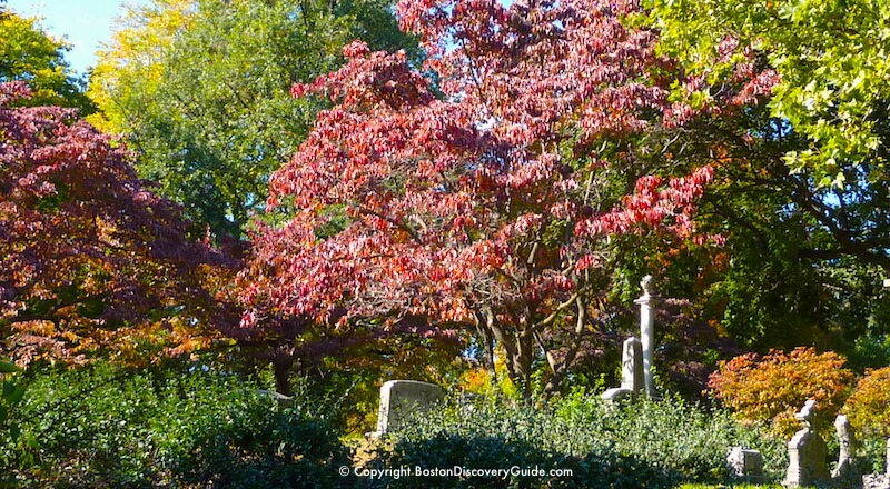 Beautiful fall colors in Mount Auburn Cemetery