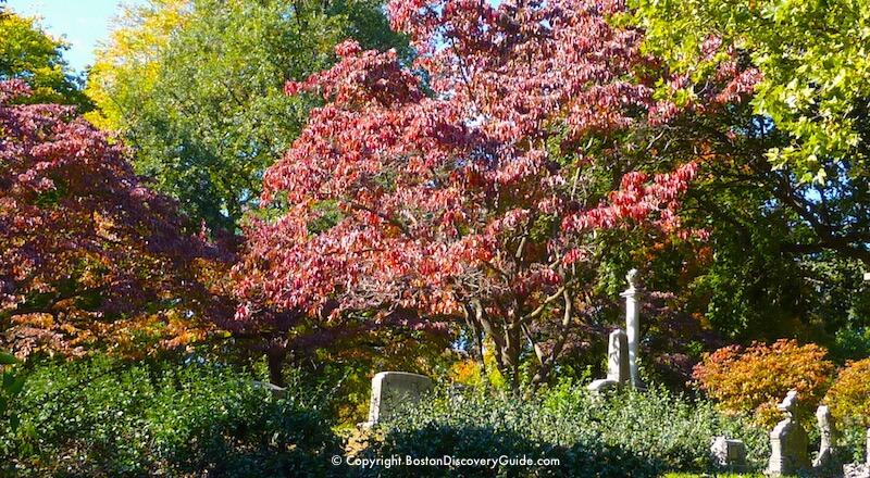 Beautiful fall colors in Mount Auburn Cemetery