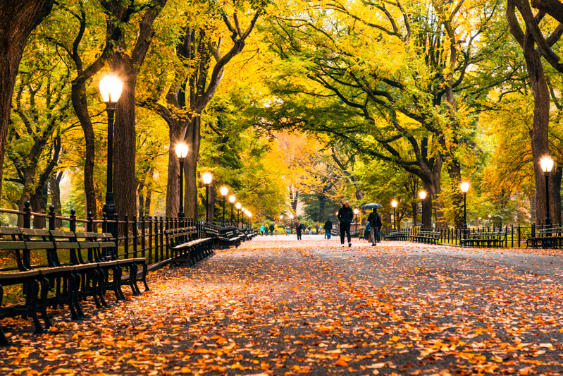 New York's Central Park in the fall
