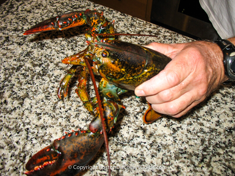 This is how to hold a lobster correctly as you're putting it into a pot of boiling water