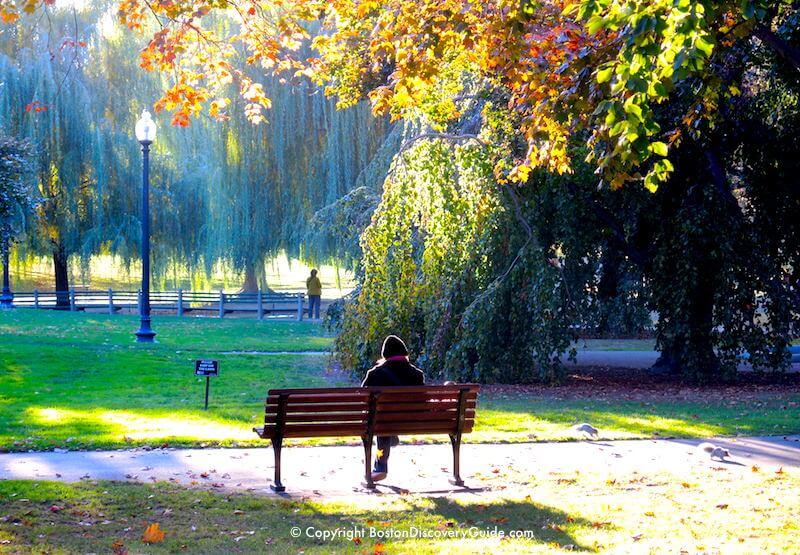Quiet scene near the Lagoon in the Public Garden