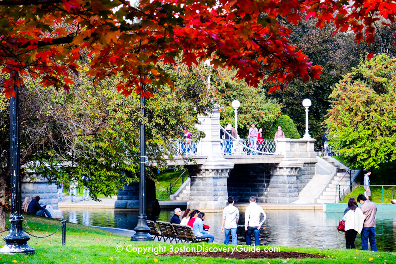 Fall color near the suspension bridge over the lagoon in Boston's Public Garden