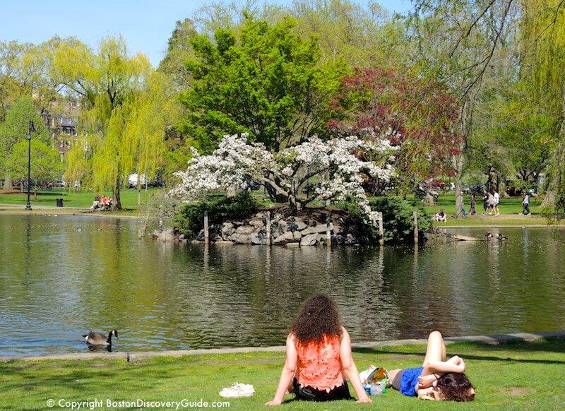 Looking toward Duck Island in the Lagoon in the Public Garden